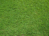 Top View of Green Grass — 图库照片