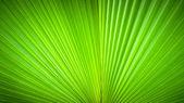 Abstrakcyjnego obrazu liści — Zdjęcie stockowe