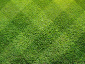 Top view of Beautiful fourty five degree square tone lawn — Stock Photo