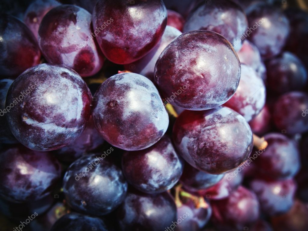 purple grape — Stock Photo © Nuttakit Sukjaroensuk #