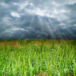 The grass fields under a cloudy sky — Foto de Stock