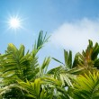 Green leaves with the sun shining - Stock Photo