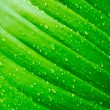 Water drop on Green leaf — Photo