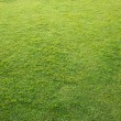 Nature Green Grass — Foto Stock