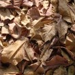 Dry leaves — Stockfoto #5256546