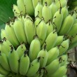 Many green Banana — Foto Stock