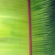 Stock Photo: Green banleaf