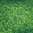 Large green leaves on the ground — Foto de Stock