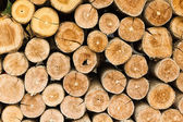The section of the circular timber — Stock Photo