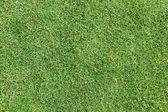 Vista superior de la hierba verde — Foto de Stock