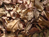干树叶 — 图库照片