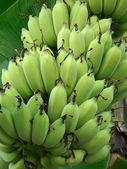 Muchos plátanos verdes — Foto de Stock