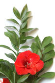 Bouquet with bright red lily and big green leaves — Stock Photo