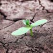 Green newborn sprout on chapped earth — Stock Photo