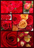 Collage of images with red roses — Stock Photo