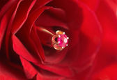 Ring with ruby in red rose — Stock Photo