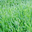 Stock Photo: Fresh grass and drops of dew