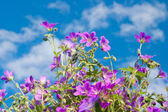 Bright vibrant wild flower — Stock Photo