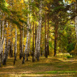 Autumn forest — Stock Photo #4955512