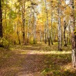 Autumn wood — Stock Photo #4956327