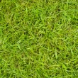 Stock Photo: Texture of grass