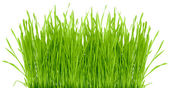 Grass isolated — Stock Photo