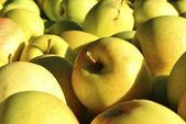 желтые яблоки — Стоковое фото