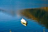 Lago espejo — Foto de Stock