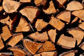 Firewood larch — Stock Photo
