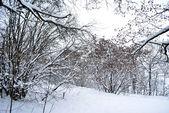 Idylliska skogen — Stockfoto