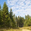 Stock Photo: Forest Road in summer