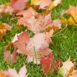 Maple leaves — Stock Photo #4243930