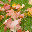 Maple leaves — Stock Photo #4243931