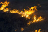 Fire in steppe — Stock Photo