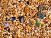 The beach of bright sea-shells — Stock Photo