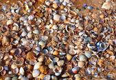 A lot of seashells on a sand beach — Stock Photo