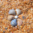 Flower from sea-shells on beach — Stok Fotoğraf #4102670
