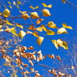 Autumn yellow leaves and deep blue sky — Stock Photo