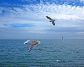 Seagulls flying above the sea — Stock Photo