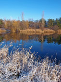 Winter landscape with a rush and lake — Stock Photo