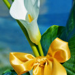 Calla and bow — Stock Photo