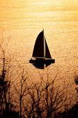 Катамаран на закате — Стоковое фото