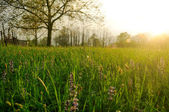 Spring sunlight over meadow — Stock Photo