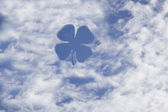 Clover on sky — Stock Photo
