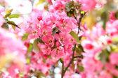 Tree in flowers — Stock Photo
