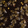 In the beehive — Stock Photo