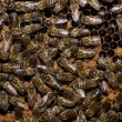 Stock Photo: In the beehive