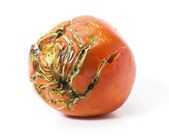 Bad tomato with scars isolated — Stock Photo