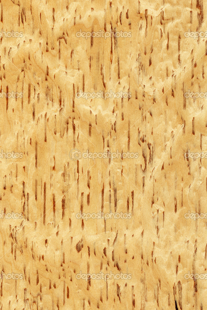 Birch Wood Texture Stock Photo Bambuh 5020200