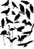 Lot of vector silhouettes of birds — Stock Vector